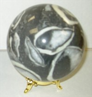 Shell Fossil sphere 78mm 3inch